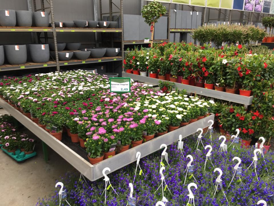Tuincentrum in Zuid-Holland met een breed assortiment planten